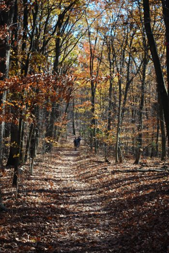 41 Mile stretch of the Appalachian Trail across Maryland